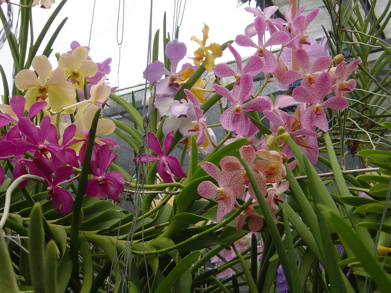 Jardin de Orquideas