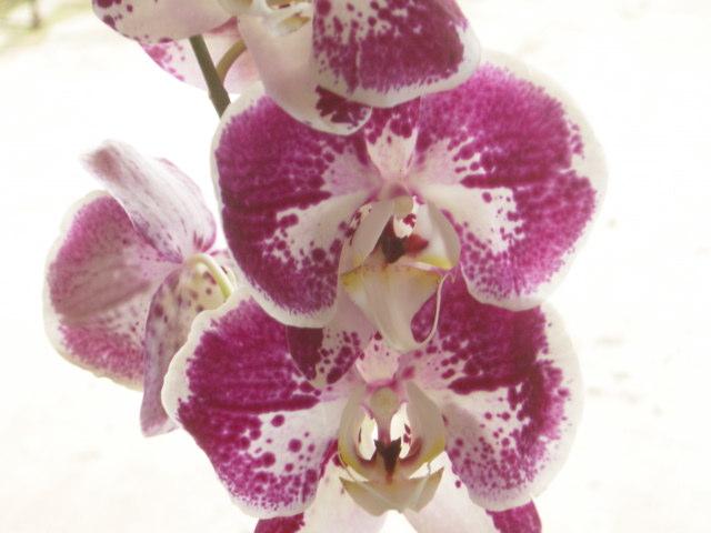 Cuidado de Orquideas. 3 Errores Graves