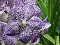 Decora Tu Hogar Con Orquideas: El Espacio Perfecto