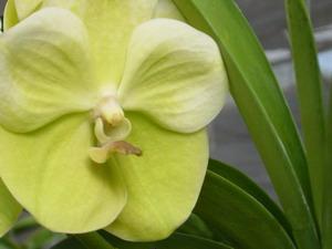Orquideas: Decorando Los Espacios Más Secos De Tu Hogar