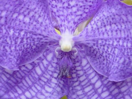 Orquideas. Se Extinguen Especies Endémicas de Chiapas, México