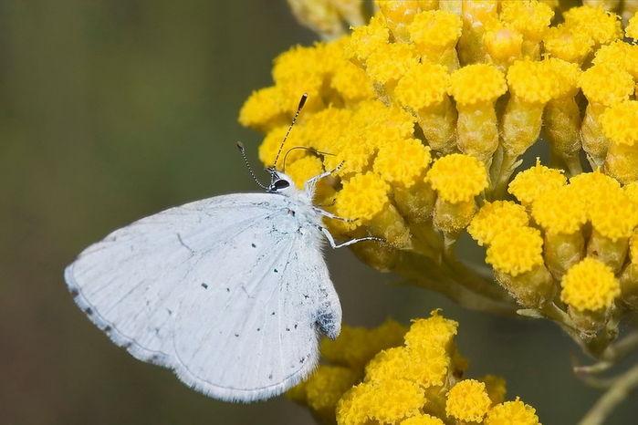 Como Llenar Tu Jardín De Mariposas