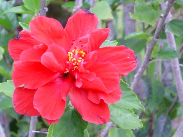 Cuidado del Jardín. 7 Consejos Para El Huerto De Tu Casa