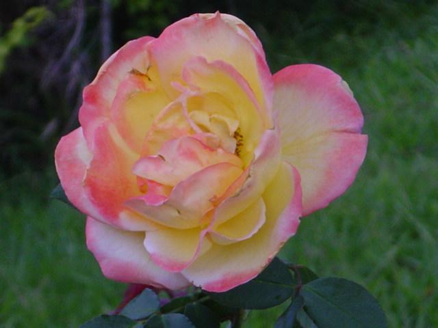 Tu Jardín: ¿Eres Jardinero De Fin De Semana? Aquí Tienes Todos Los Consejos Que Necesitas Saber