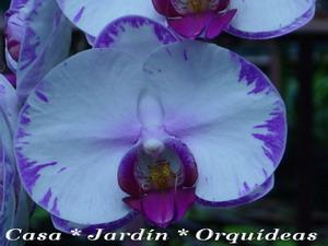 Preguntas y Respuestas Sobre Orquideas, Casa y Jardin