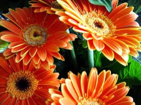 decoracion-con-flores.jpg